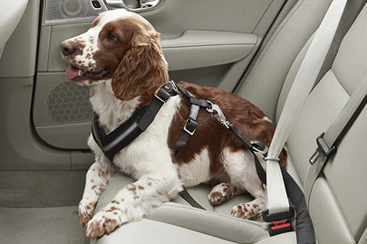 Dog harness Image