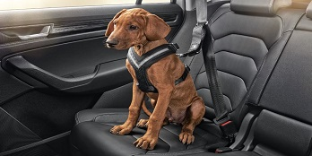 Dog Seatbelt (Small)