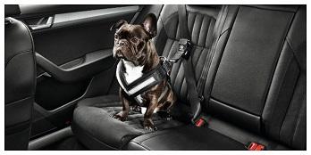 Dog Safety Belt (Small)