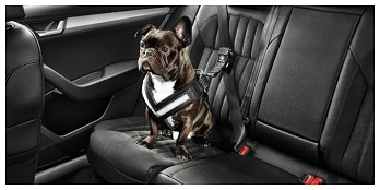 Dog Seat Belt (Small)